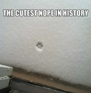 cutest nope