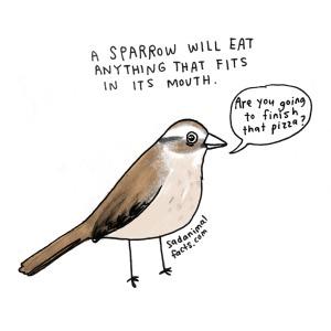 sadanimalfactssparrow