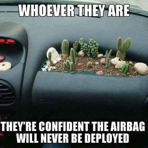 airbag-cacti