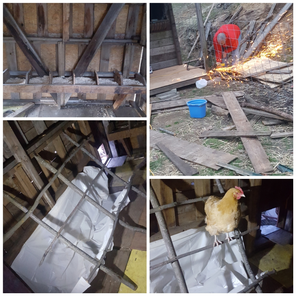 chicken barn 3