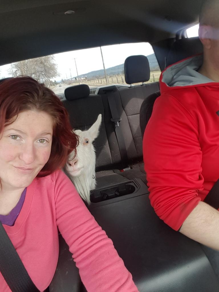 tilly car ride