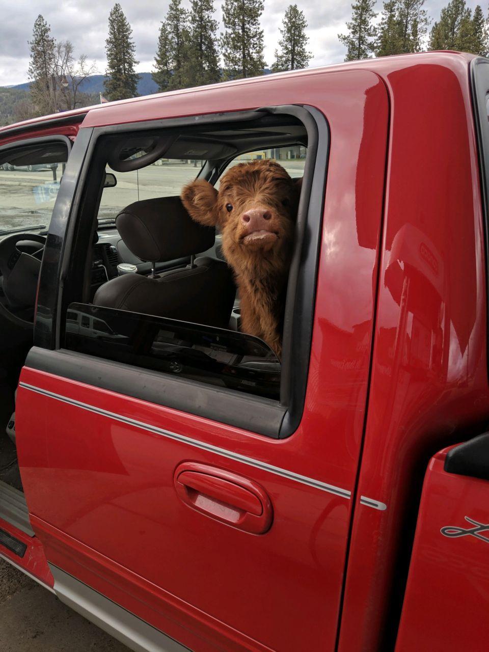 jamie in truck 2