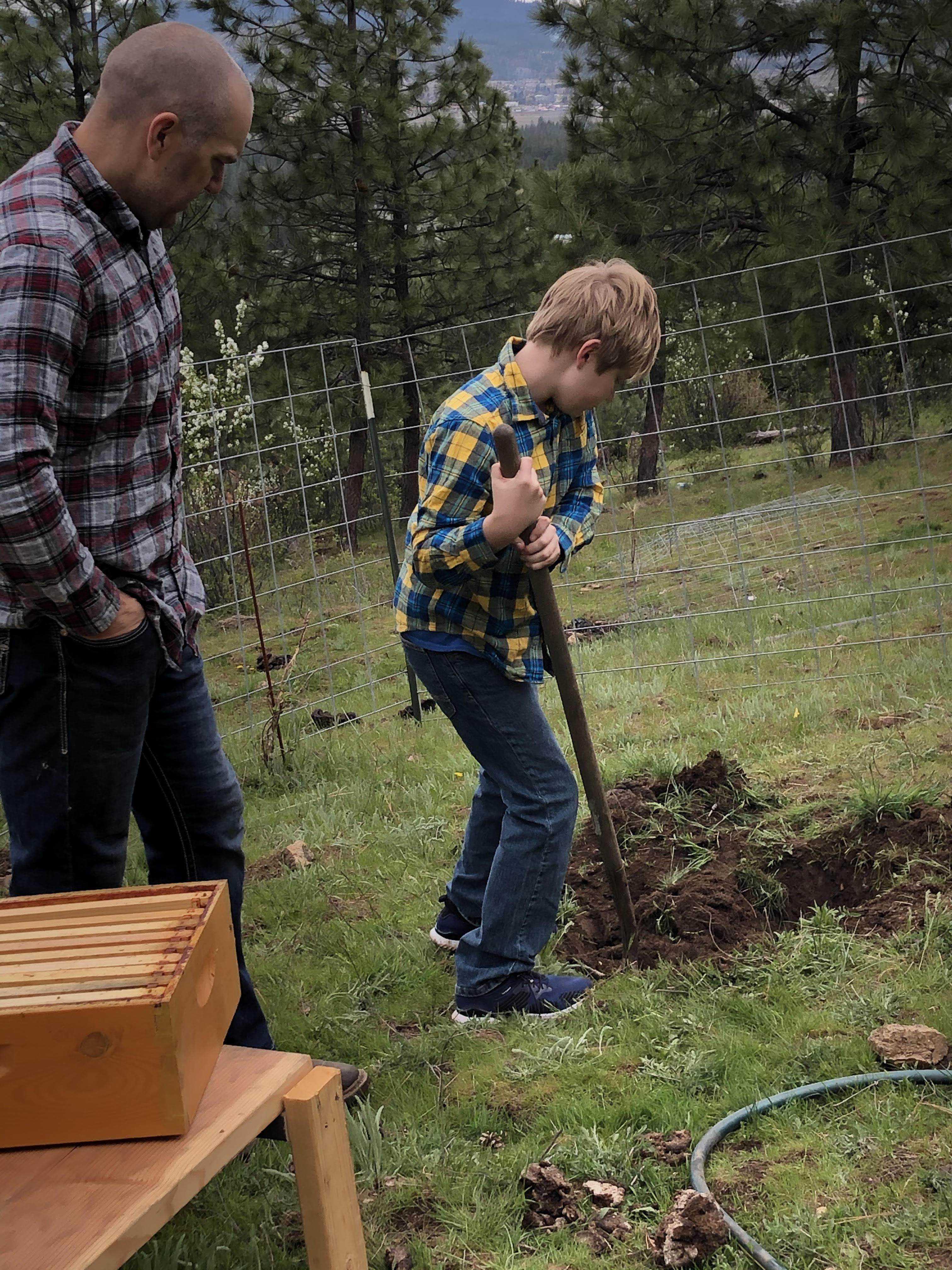 apiary tree planting