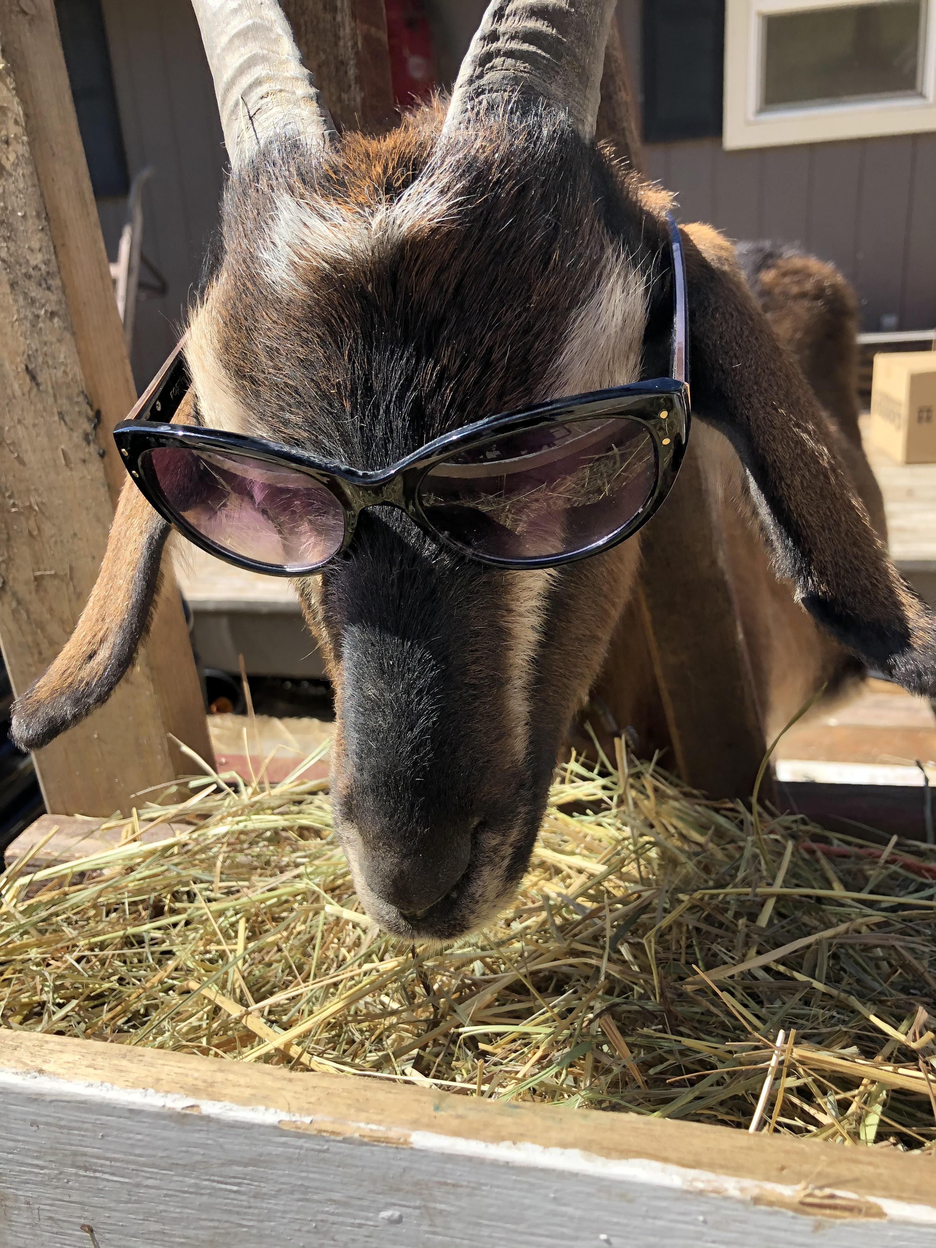 Cheyenne sunglasses